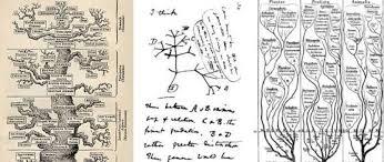 darwin proven regarding tree of