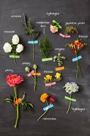 Pretty Types Of Flowers - flower names by color flower flowers and gardens