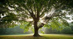 25 kickass and interesting facts about trees kickassfacts