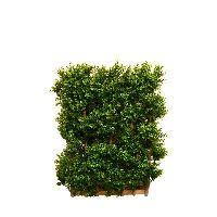 hedge box shaped artificial topiary plants
