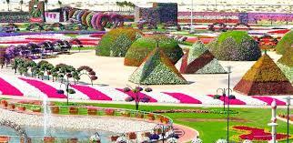 amazing pikchaz attractions dubai u0027s miracle garden world u0027s