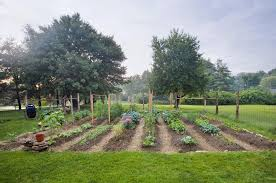 planning and planting a vegetable garden