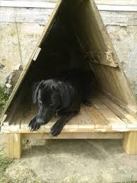 Good Backyard Pets Pallet Dog House 6 U2026 Pinteres U2026