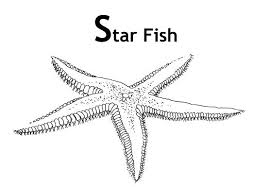 starfish sea creatures coloring page click to see printable