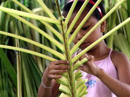 palm for palm sunday jairahbelle jamolin 10 helps weave coconut leaves