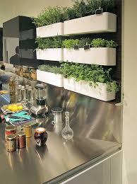 garden kitchen ideas best 25 kitchen herb gardens ideas on kitchen herbs