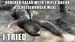 Anteater Meme - sloth who tried meme album on imgur