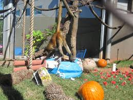 spirit halloween kansas city zoo animals getting into the spooky spirit of halloween kfor com