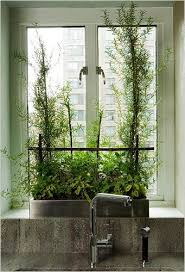 Window Sill Herb Garden Designs Kitchen Herb Garden Those Plants Are Rosemary And It S The