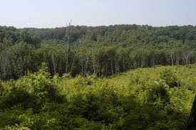 Ohio forest images Zaleski state forest the nature conservancy jpg