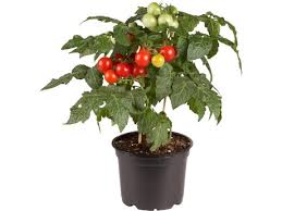 naeldebakken enters the world of ornamental edibles