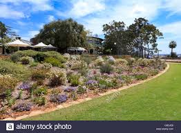 australian native plants perth native western australian wildflower display at kings park with