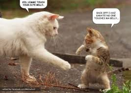 Karate Meme - funny cat memes we love cats forever