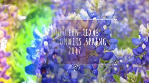 southern texas bluebonnets spring 2017 youtube
