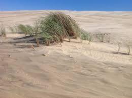 dune du pilat chambre d hote activites chambres d hotes les arums de sanguinet