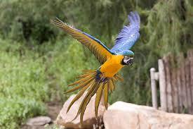 Tropical Dry Forest Animals And Plants - macaw san diego zoo animals u0026 plants