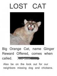 Missing Cat Meme - hilarious paper street signs neatorama