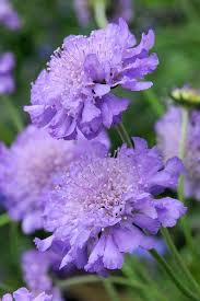 Colors Of Purple Best 25 Purple Flowers Ideas On Pinterest Purple Lilac Purple