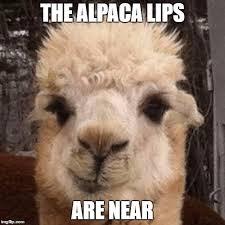 alpaca smirk meme generator imgflip