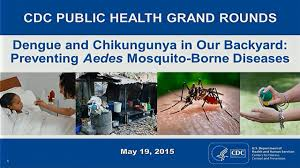 dengue and chikungunya in our backyard preventing aedes mosquito