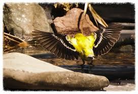 Backyard Wild Birds Bird Safe Backyard U2014 Raptor Education Group Inc