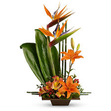 birds of paradise flower bird of paradise flower meaning symbolism teleflora