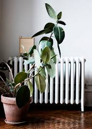 4 easy indoor houseplants u2013 tpw