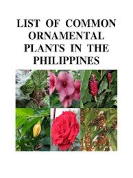 list of common ornamental plants in the philippines trees plants