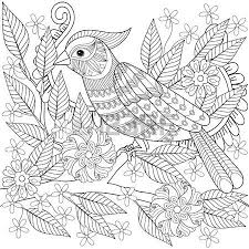 120 chaffinch bird stock illustrations cliparts and royalty free