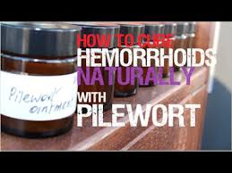 how to cure hemorrhoids naturally with pilewort herbal medicine
