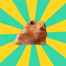 Dramatic Squirrel Meme - images dramatic squirrel meme