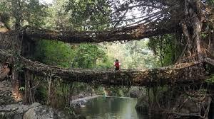 file double decker living tree root bridges meghalaya jpg