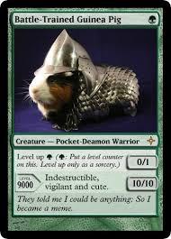 Guinea Pig Meme - armored guinea pig goes magic the gathering guinea pig armor