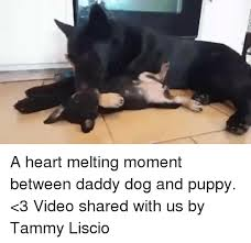 Melting Meme - a heart melting moment between daddy dog and puppy 3 video shared