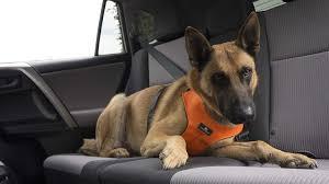 belgian shepherd gumtree sleepypod clickit sport crash tested car safety dog harness small