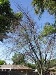 backyard apple tree dying why can it be saved ask an expert