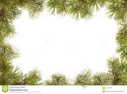 branches christmas tree christmas lights decoration