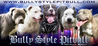 american pit bull terrier website american pit bull terrier breeders and kennels american pit bull