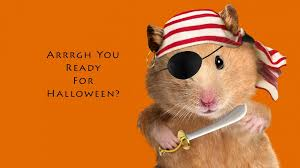 funny halloween pirate hamster hd wallpapers