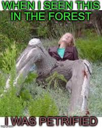 Morning Wood Meme - morning wood national forest imgflip