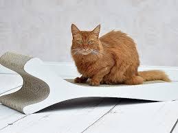 griffe canapé griffe canapé awesome les amis des chats de bligny hi res