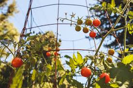 limited on garden space 7 tips for bountiful organic gardening in