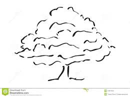 tree sketch stock photo image 10907620