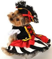 Halloween Costumes Yorkies Dogs Dog Costumes Dog Costumes Dog Yorkies Doggies