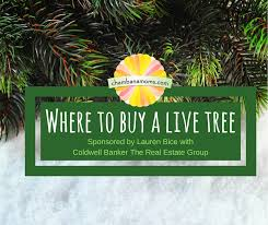 where to buy a live tree in chaign urbana