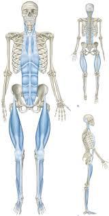 Human Anatomy Planes Of The Body Foundations Fascia U0026 The Anatomical Planes The Yogini
