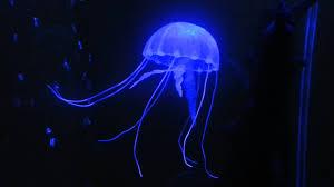 aquarium jellyfish ornament