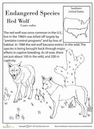 endangered species red wolf worksheet education com