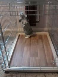 Rabbit Hutch Set Up Dog Crate Set Up Page 2 Rabbits United Forum Things For The