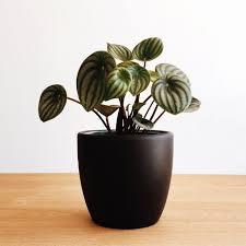 plant on desk the best plants to de stress your desk mydomaine